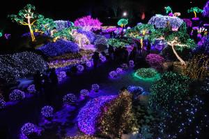 South Korea Christmas Lights