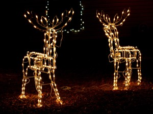 Reindeer with Christmas Light